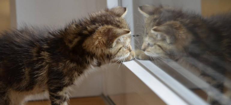 How to Fir a Cat Flap on a Wooden Door